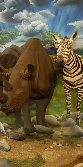Rhino and Zebra - Dacotah Prairie Museum